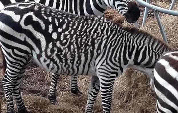 Ни на кого не похож: самые невероятные отметины у животных