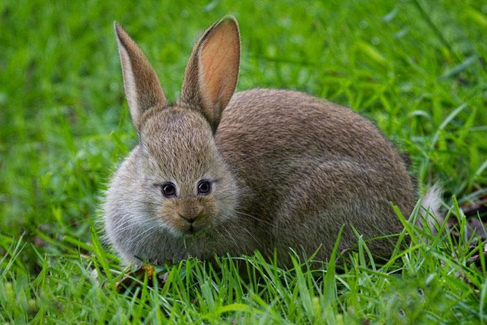 Если бы у некоторых животных были глаза спереди, а не по бокам