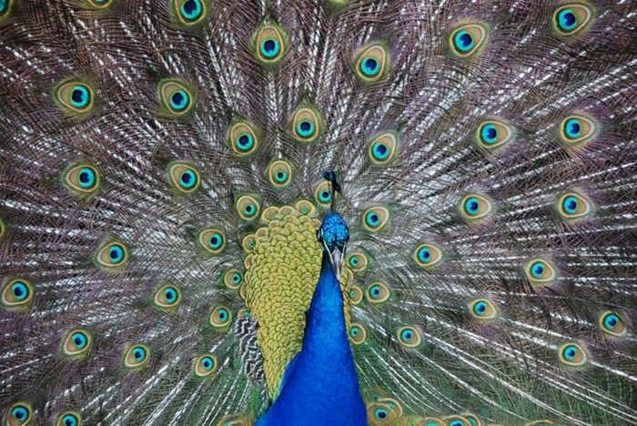 Самые красивые птицы в мире