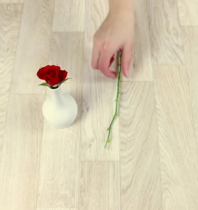 Вы вставляете розу в картошку и сажаете ее. Через два месяца происходит нечто уникальное