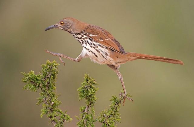Тридцать фото нелепых и немного забавных птиц