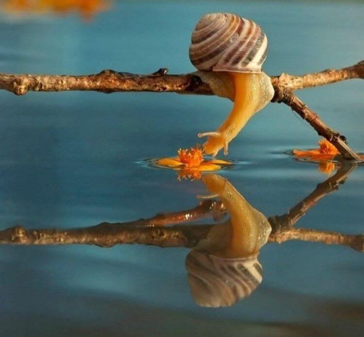 Сказочные макро-фото художника Вячеслава Мищенко