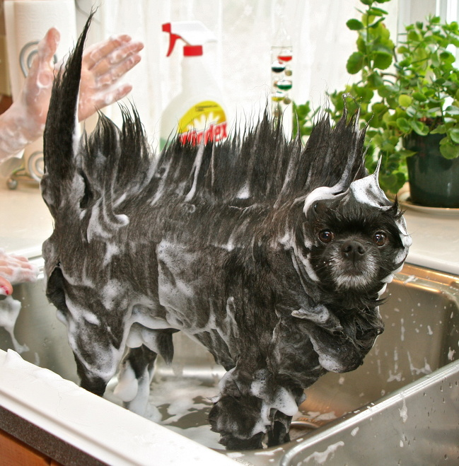 20 харизматичных животных, в которых вы точно узнаете себя