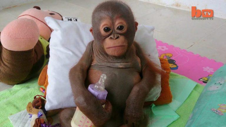 Этот малыш целый год был заперт в клетке! Когда медсестра взяла его на руки, то слёзы сами навернулись на глаза…