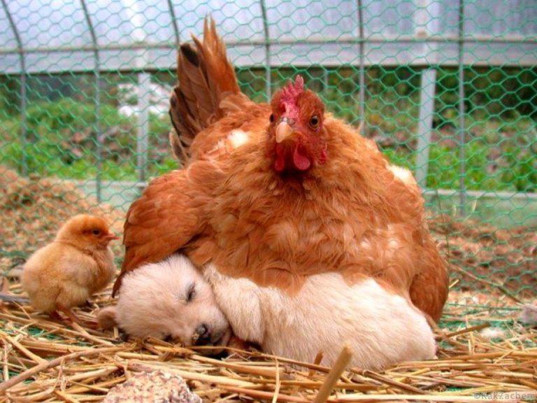 Смешные и трогательные фото животных, которые помогут вам пережить серые будни