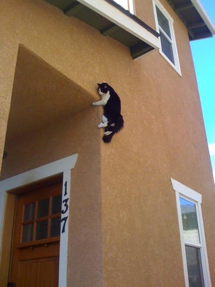 20 котов, которые искали приключений и… нашли